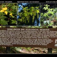 Honeymoon Bay sign , flowers, leaves