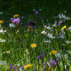 SP05__K-Hill_P1110293_Cemetery-Wildflowers