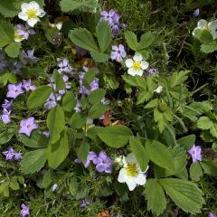 ElkMtn_flowers_TGagne_1635