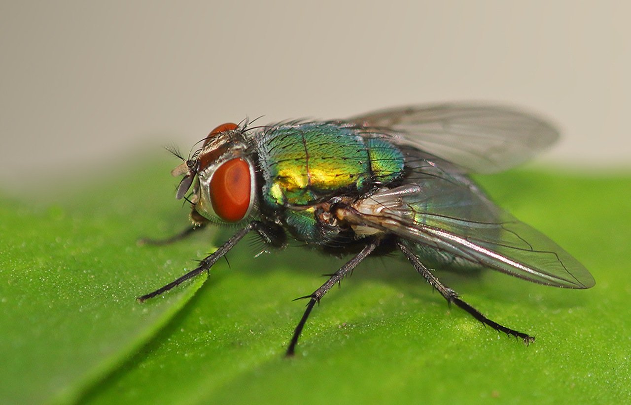 Entomology - 3rd place - Virginia Hayes
