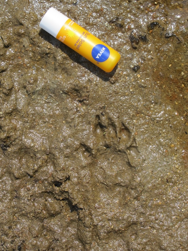 ©Janet Snell - Animal track at Cirque Lake  1