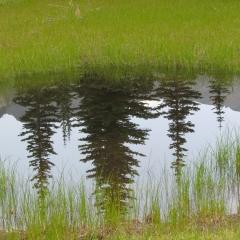 © Martin Kafer - Pond reflection