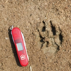 ©Janet Snell - Animal track at Cirque Lake 2