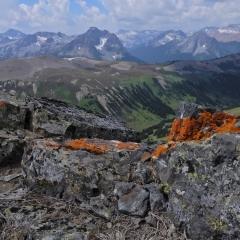 ©Denis Laplante - Orange lichen and panorama