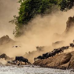 1st Place - Mammals ©Donna Topham