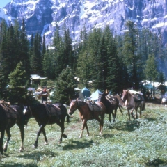 00 - Larch Valley 1962 Pack Horses _2_