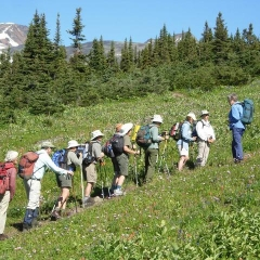 Rosamund leading her flock of wildflower enthusiasts up the Smithers Ski Hill_