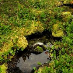 Boggy habitat © Gail Newell