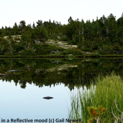 Drinking Lake in a reflective mood Backcountry lake behind Goat-Ridge © Gail Newell