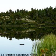 Drinking Lake in a reflective mood Backcountry lake behind Goat-Ridge © Gail Newell