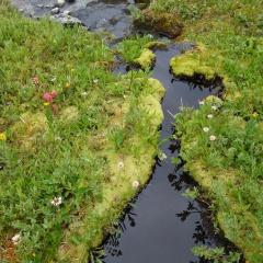 Meadow Moss © Ron Klassen